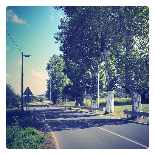 Torrelavega - arboles carretera