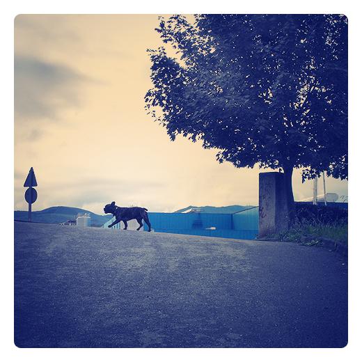 Torrelavega - perro negro