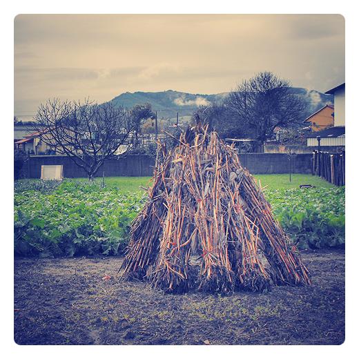 Torrelavega - agricultura tradicional