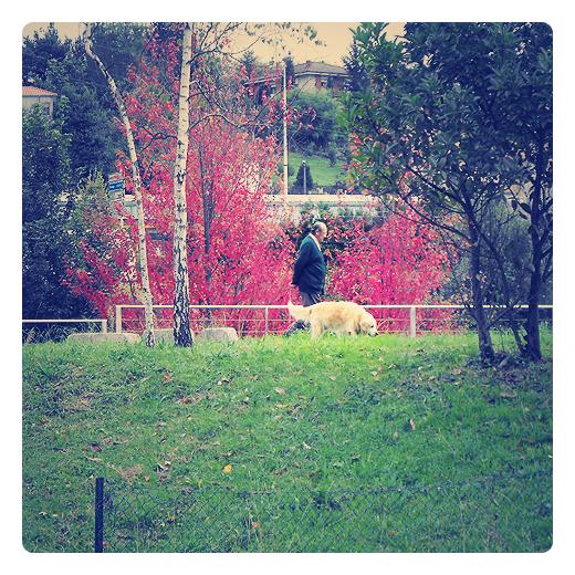 Torrelavega - paseo con el perro