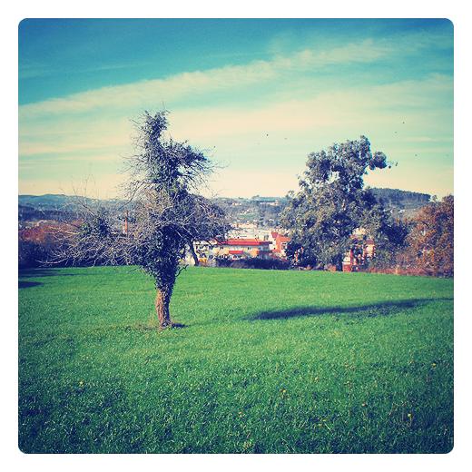 Torrelavega - arbol solitario