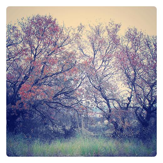 Torrelavega - ramas retorcidas