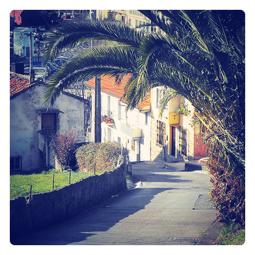 Torrelavega - hojas de palma