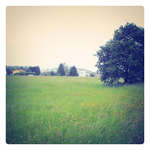 hierba alta, prado sin segar, hierba verde y flores en Torrelavega