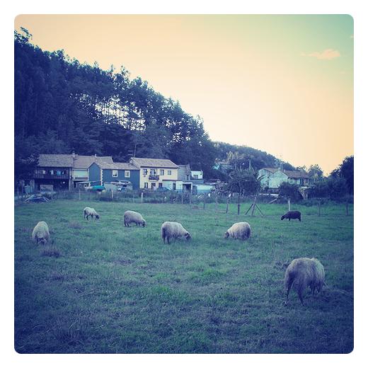 Riaño, barrio a las afueras de Torrelavega, naturaleza, ovejas y casas en Torrelavega
