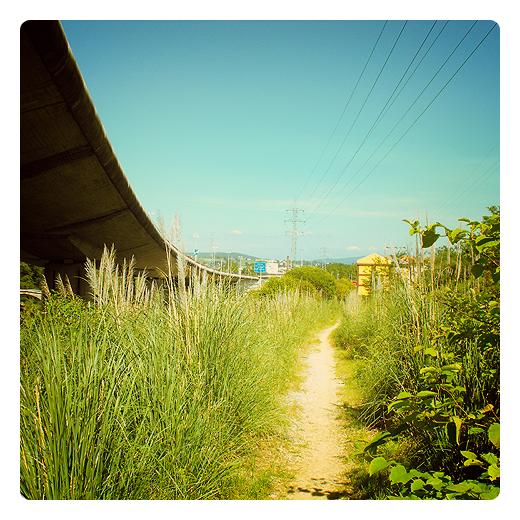 atajo, camino mas corto al lado de la autovia, naturaleza, verde, sol, en las afueras de Torrelavega