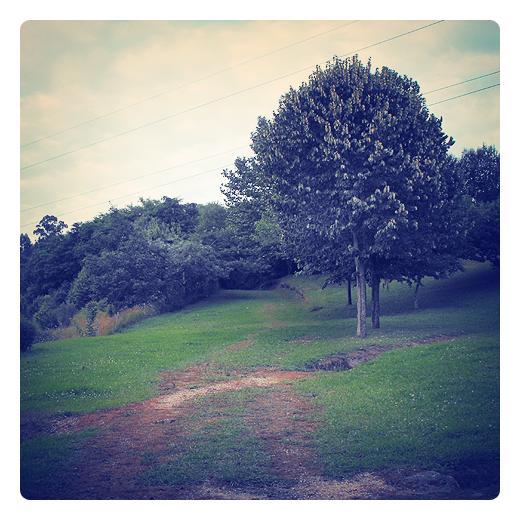 camino verde, via, pista, vereda, tierra, hierba verde, arboles, rodadas, naturaleza en Torrelavega