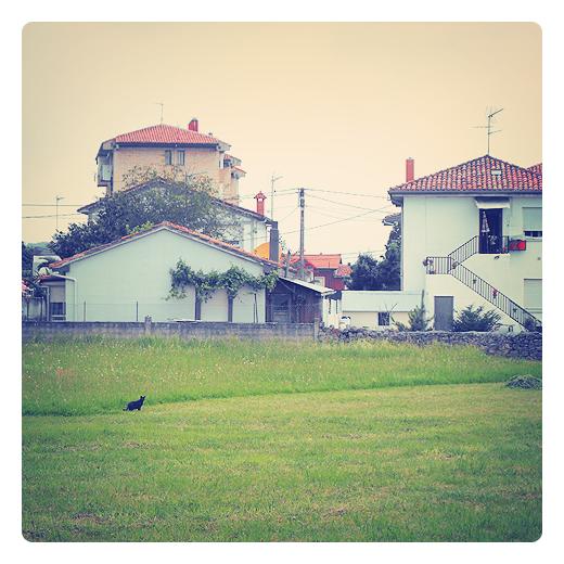 gato campestre, callejero, gato negro, paisaje, prado segado, verde, casas, escalera, fauna en Torrelavega