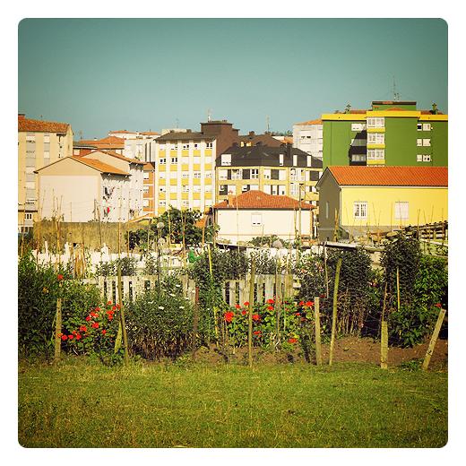 huerto en flor, vistas a la ciudad, edificios, flores rojas, tierra sembrada, huerto en Torrelavega