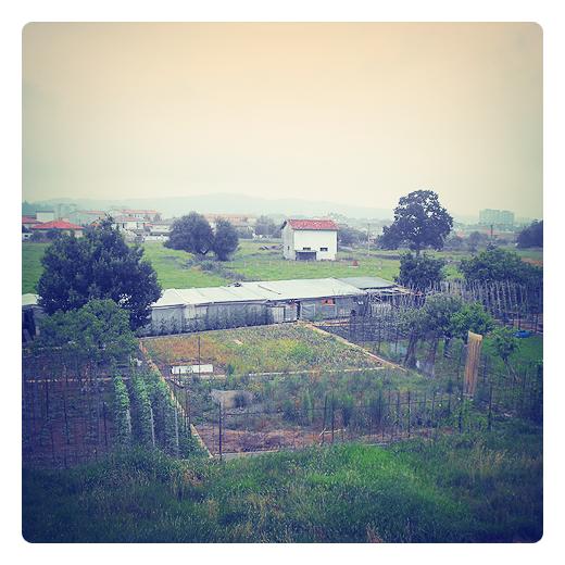 suelo fertil, tierra de cultivo, sustrato, nutrientes, minerales, huerta, casetas, horizonte, usos agricolas en Torrelavega