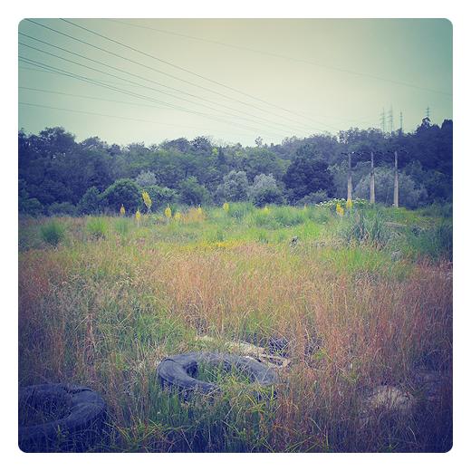 vertedero incontrolado, residuos solidos urbanos, incivismo, paisaje, hierba, arboles, tendido electrico, malas practicas medioambientales en Torrelavega