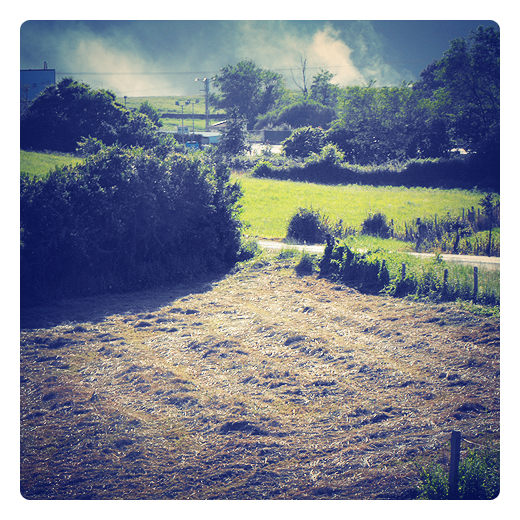 quema rastrojos, eliminacion controlada, restos de cultivos, tallos y hojas, suelo cultivo, malas hierbas, usos agricolas en Torrelavega