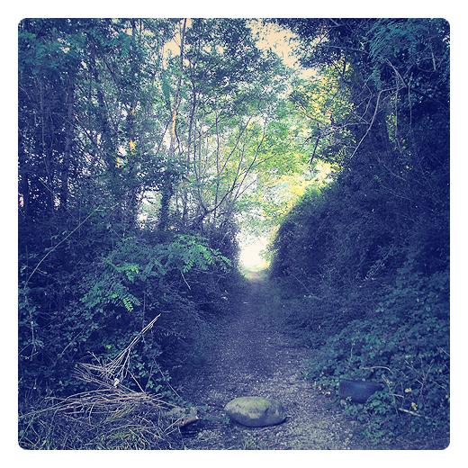 senda oscura, sendero, pista, vereda, camino sombrio, via, zarzas, desechos, arboles, periferia, otra mirada, poesia visual en Torrelavega