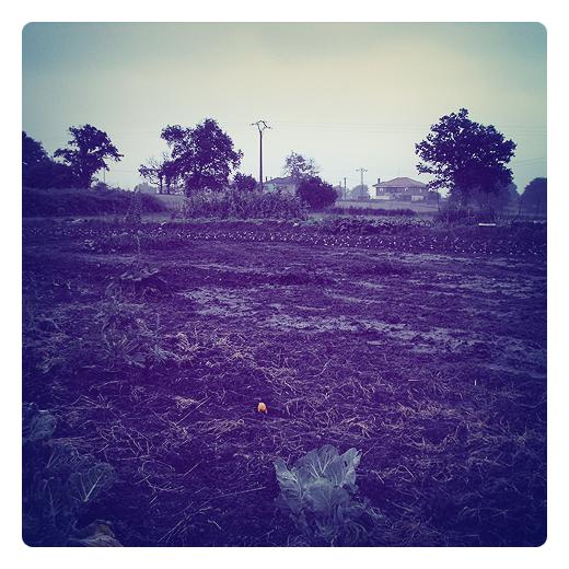 tierra humeda, agua de lluvia, absorcion de nutrientes, riego lluvia, crecimiento, desarrollo vegetal, paisaje arboles, huerta en Torrelavega