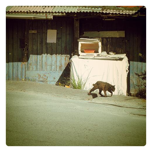 gato despeinado, desaliñado, vida de aventura, callejero, casetas, alimentar animales callejeros, refugio, gato negro en Torrelavega