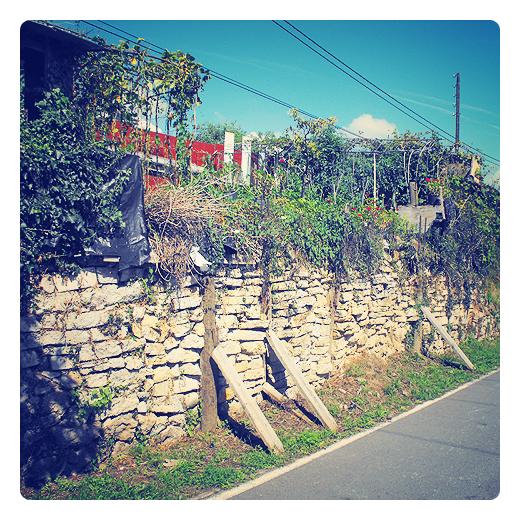 huerto bancal, rellano, relleno de tierra para cultivo, obra humana, aprovechamiento suelo, muro apuntalado, pared de piedra, agricultura de autoconsumo en Torrelavega