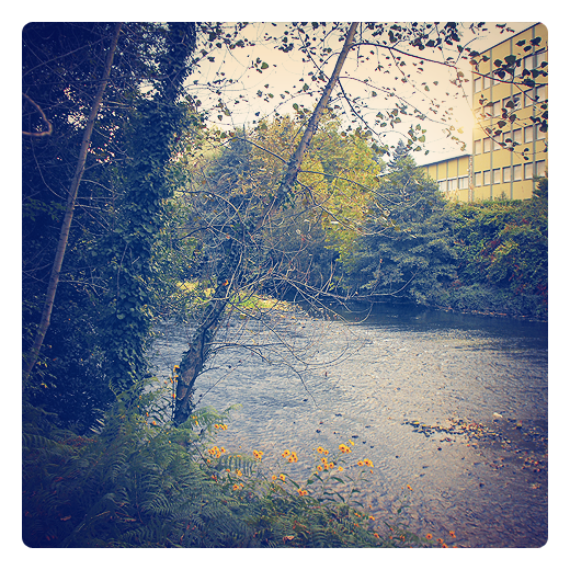 orilla del rio, paisaje de arboles y rio, Instituto de Enseñanza Secundaria Besaya, IES Besaya, el rio besaya en Torrelavega
