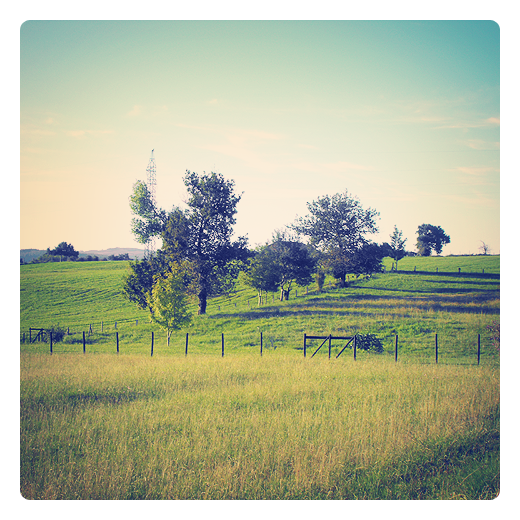 paisaje de arboles, grupo aislado de arboles, conjunto, marco vegetal, naturaleza, paisaje, colina, finca cerrada, extrarradio, periferia, diversidad de especies vegetales en Torrelavega
