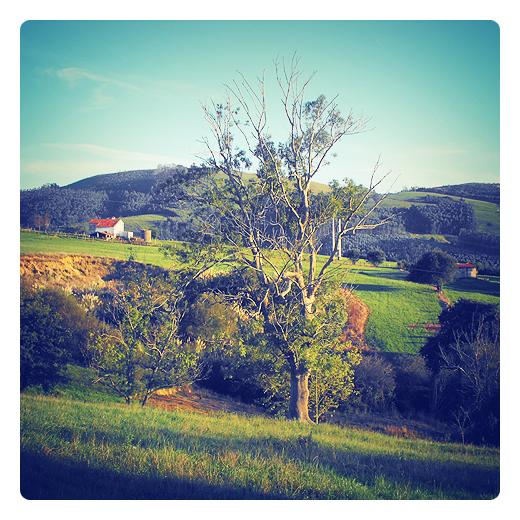 pendiente de terreno, extension, superficie inclinada, angulo de inclinacion, vertiente, paisaje de casas y montañas, gran arbol, perfil topografico de Torrelavega