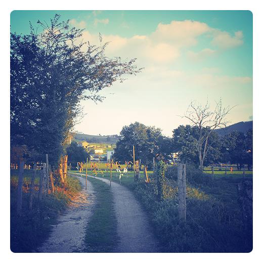 arboles del camino, paisaje de arboles, rodadas camino, finca cerrada, portilla, Tanos, La Riguera, atardecer, luz de tarde, paisaje de arboles en Torrelavega