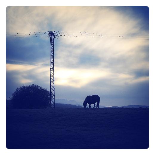 aves en los cables, alta tension, tendido electrico, contraluz, arbusto, caballo, cirros, horizonte de montañas, paisaje con arbol, anochecer en Torrelavega
