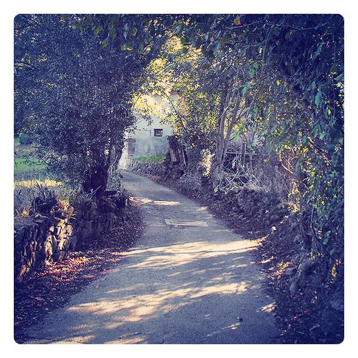 calleja, camino de pueblo, carretera rural, camino vecinal, tunel de arboles, reflejos sol, atardecer,hojas caidas, Tanos, periferia de Torrelavega