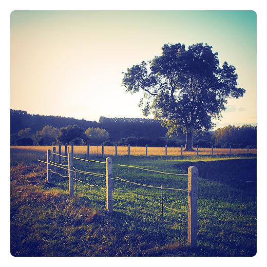 calor en otoño, otoño calido, fin del verano, viento de castañas, viento sur, paisaje de árbol, prado vallado, hierba seca, naturaleza, atardecer, efecto Föhn en Torrelavega