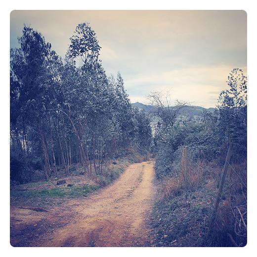 explotacion forestal, bosque eucaliptos, Eucalyptus, silvicultura, hoja perenne, camino de tierra, pista forestal, horizonte, monte Dobra, industria maderera, plantacion forestal en Torrelavega