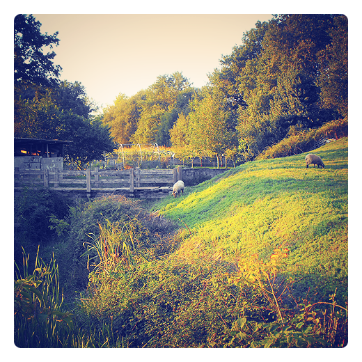 paisaje rural, pueblo, puente de madera, paisaje arboles, ovejas, ganado ovino, ganado pastando, cauce de rio, prado verde, Tanos, El Ovio, Lobio en Torrelavega