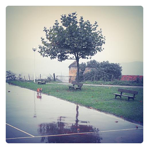 perro bajo la lluvia, perro de lluvia, paisaje con lluvia, reflejos en el suelo, banco con arbol, pista de futbito, suelo mojado, cancha de barrio, neblina, tarde lluviosa en Torrelavega