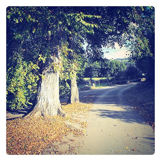 primeras hojas caidas, otoño, hojarasca, arboles, camino vecinal, paisaje de otoño, sol de otoño, sol de atardecer, naturaleza, Tanos, el otoño en Torrelavega