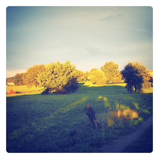 sol y sombra, zona iluminada, zona oscura, proyeccion, paisaje de arboles, prado, camino, valla de madera, sombra alargada, atardecer, viento sur, dia caluroso, otoño en Torrelavega