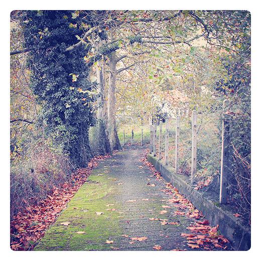 alfombra de musgo, naturaleza, calleja, atajo, hojas caidas, otoño, suelo mojado, tunel de arboles, cuesta abajo, dia de lluvia en Torrelavega