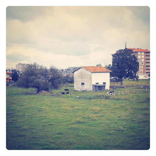 casa blanca, color blanco, granja, casa solitaria, prado con vacas, finca, vacas pastando, vacas acostadas, paisaje con arboles, agricultura y ganaderia, periferia de Torrelavega