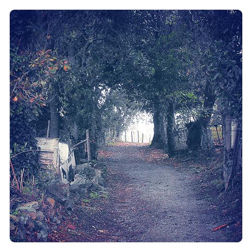 claro del bosque, camino del bosque, camino de tierra, pista forestal, robles, muro de piedras, valla de palos, hojas caidas, luz del bosque, Tanos, el otoño en Torrelavega