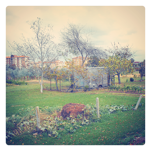 huerta urbana, reutilizacion, chatarra, urbanarbolismo, pieza de vehiculo, panorama urbano, paisaje de arboles, postes cemento, prado, hojas caidas, arboles secos, actividad agricola en Torrelavega
