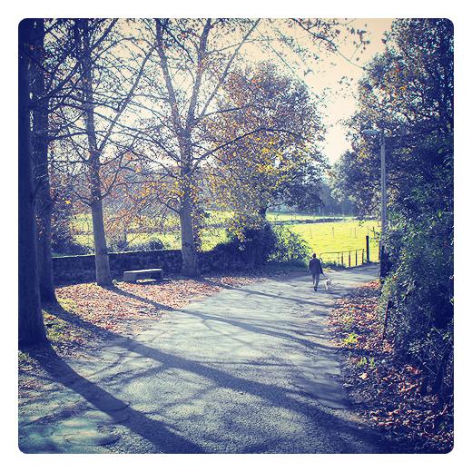 aire libre, actividad tiempo libre, paseando al perro, carretera comarcal, arboles, silueta humana, hojas caidas, otoño, Tanos, fotografia de Torrelavega
