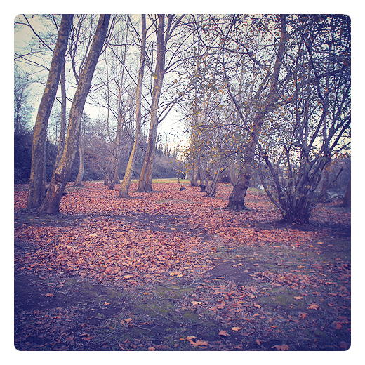 alfombra de hojas, hojas secas, hojas caidas, arboles sin hojas, materia organica, paisaje de arboles, parque de La Viesca, fotografia de Torrelavega