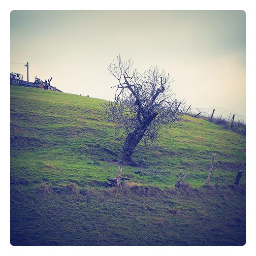 arbol inclinado, arbol sin hojas, pendiente de terreno, extension, superficie inclinada, angulo de inclinacion, vertiente, valla de postes, arbol solitario en Torrelavega