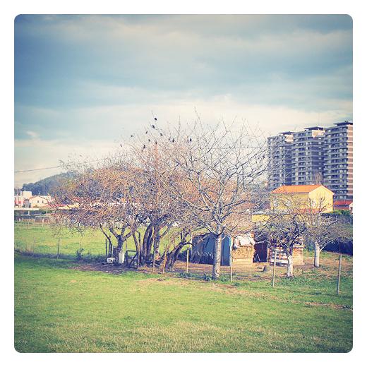 banda de pajaros, grupo de aves en los arboles, paisaje de arboles, caseta, huerto urbano, prado, dia soleado, Mies de Vega, fotografia de Torrelavega
