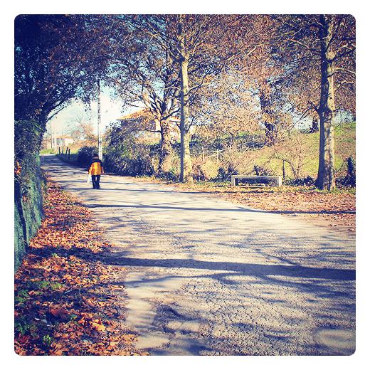 hojas muertas, hojas secas, hojas caidas, otoño, hojarasca, arboles, carretera local, grietas asfalto, silueta humana, paisaje de otoño, sol de otoño, soledad, melancolia, poesia visual en Torrelavega