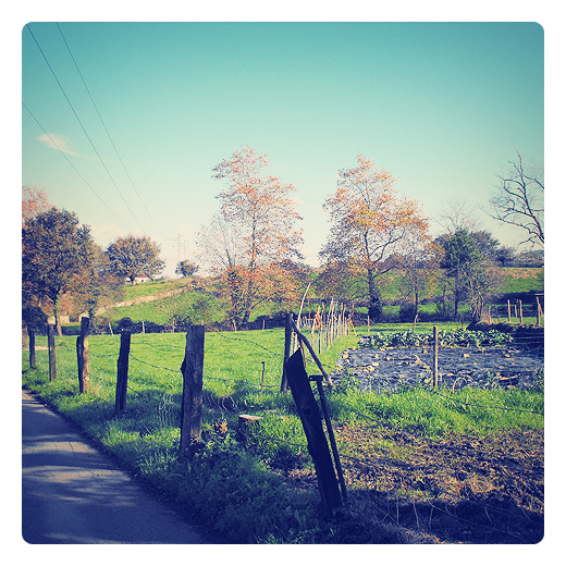 huerto en reposo, huerto de invierno, huerto protegido, paisaje de arboles, valla de postes, carretera local, prado verde, Tanos, Barrio El Lobio, colores del otoño en Torrelavega