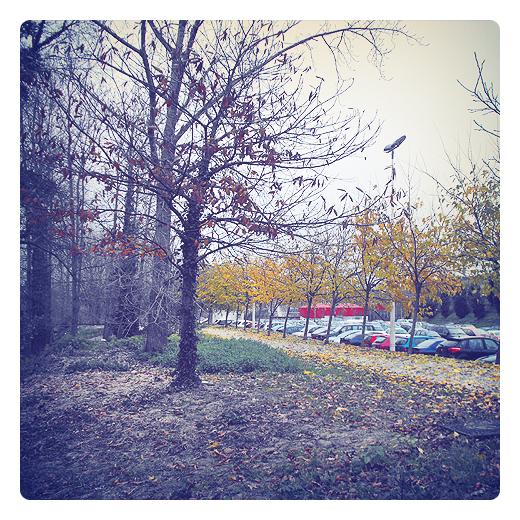 materia organica, compuesto organico, restos vegetales, hojas caidas, camino, arboles amarillos, otoño, corredor verde, fotografia de Torrelavega