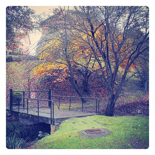 prohibido el paso, propiedad privada, acceso restringido, proteccion, entrada finca, camino de entrada, puente, arroyo, manto vegetal, arboles, alcantarilla, hojas caidas, alfombra de musgo, otoño en Torrelavega