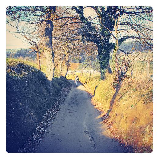 Torres Arriba, subida, pendiente de terreno, carretera comarcal, hojas caidas, silueta humana, arboles, otoño, pueblo de Torres, fotografia de Torrelavega