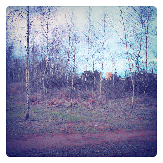 abedules, paisaje de arboles, camino de tierra, horizonte, parque de La Viesca, fotografia de Torrelavega