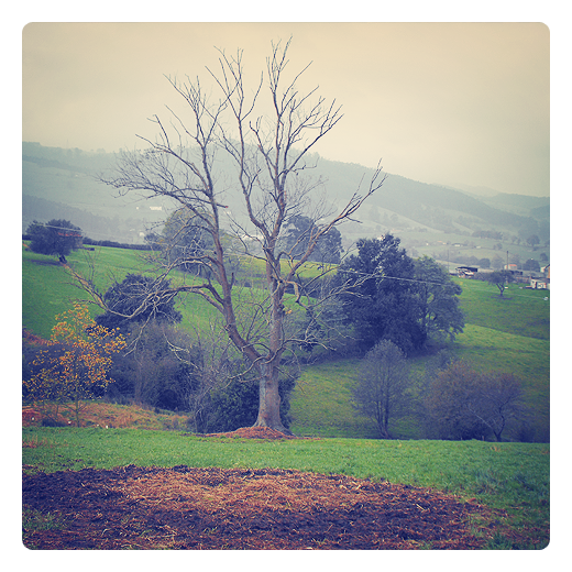 arbol sin hojas, paisaje de arboles, horizonte de montañas, dia nublado, bruma, hierba seca, fotografia de Torrelavega