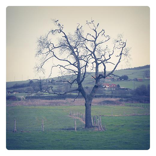 aves en arbol, aves en los arboles, pajaros, paisaje de arboles y casas, dia nublado, valla de palos, fotografia de Torrelavega