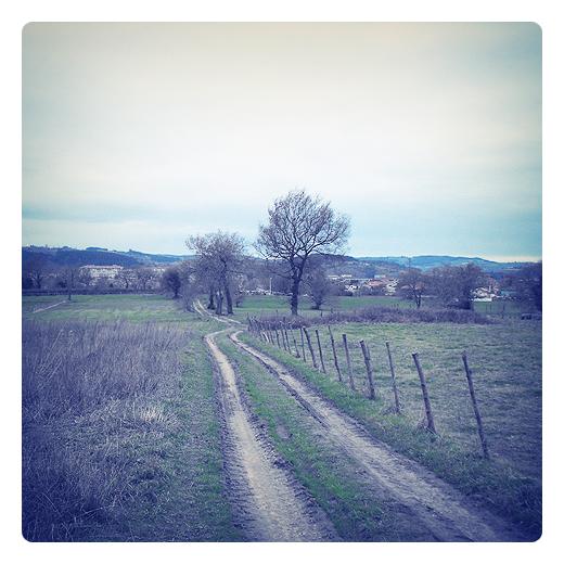 curva peligrosa, cambio de direccion, trazado, rodadas camino, valla de palos, paisaje de arboles, horizonte, Quiamingo en Tanos, fotografia de Torrelavega