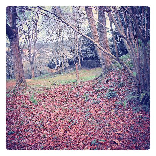 mantillo, hojas caidas, alfombra de hojas, arboles sin hojas, materia organica, paisaje de arboles, parque de La Viesca, fotografia de Torrelavega